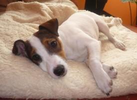 Самые популярные породы маленьких собак