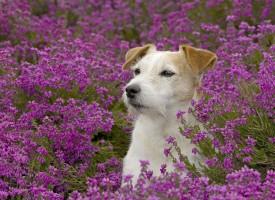Самые добрые собаки маленькой породы