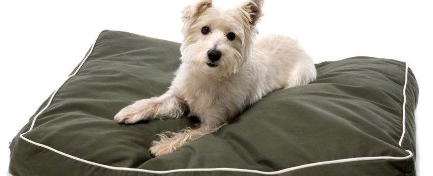 Продолжительность течки у собак средних пород