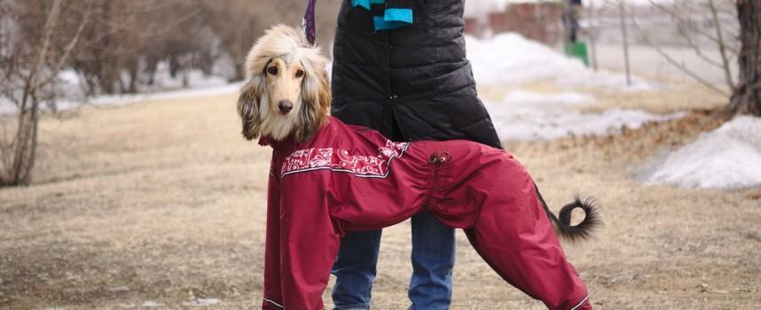 Одежда для собак средних пород