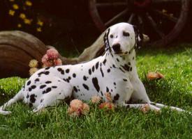 Породы собак среднего роста