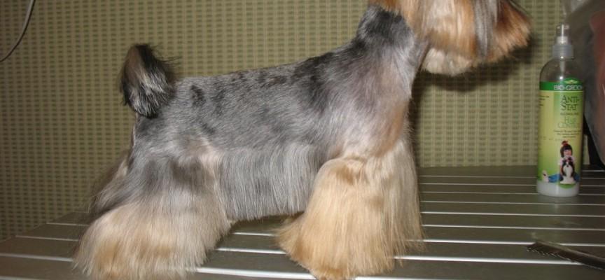 Стрижка собак в домашних условиях