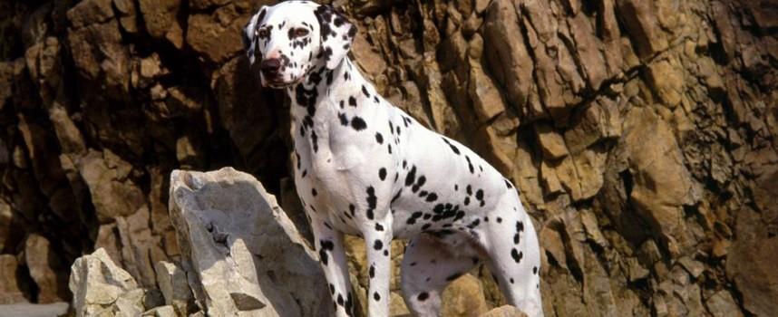 Какие немецкие клички для собак мальчиков выбрать