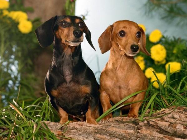 немецкие клички для собак мальчиков