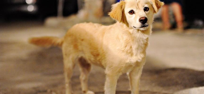 Какая нормальная температура у собак средних пород